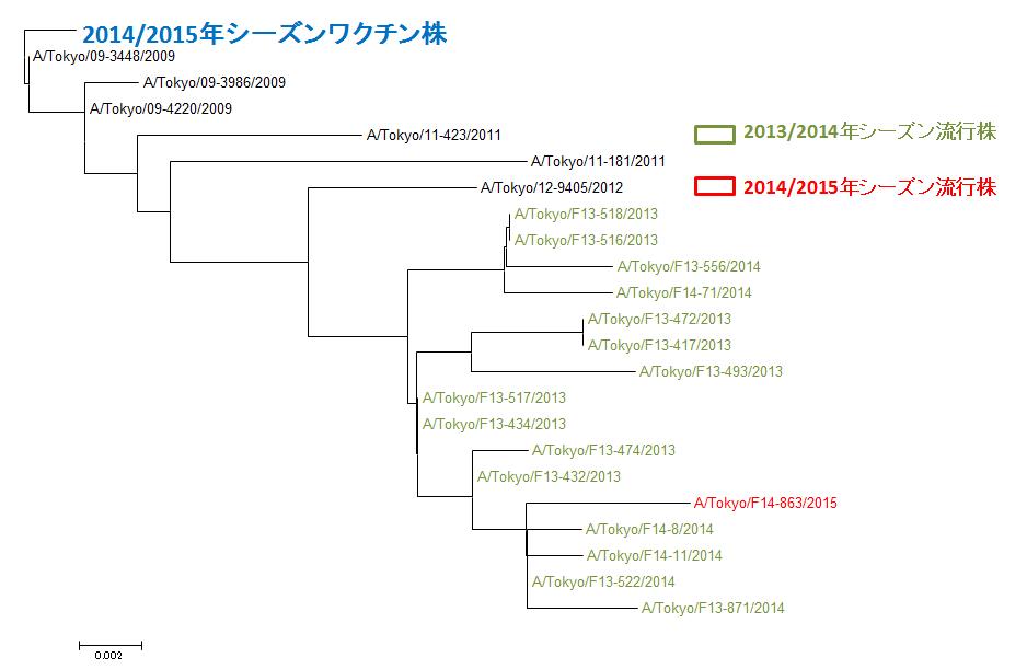 東京都におけるAH1pdm09インフルエンザウイルスのHA遺伝子系統樹